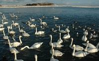 北浜白鳥公園